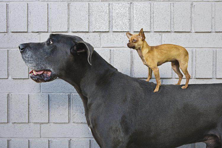 proteina masa muscular perro