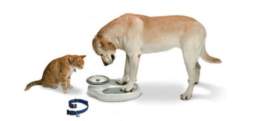 peso ideal para perros