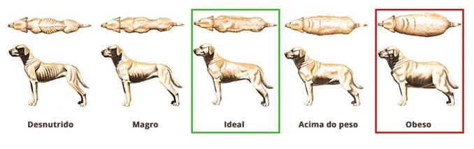 peso ideal perros