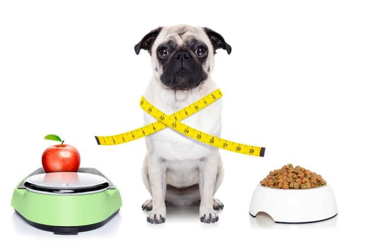 restriccion calorica perros