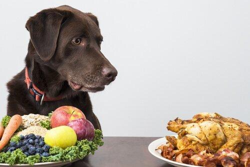 colesterol bueno y malo perros