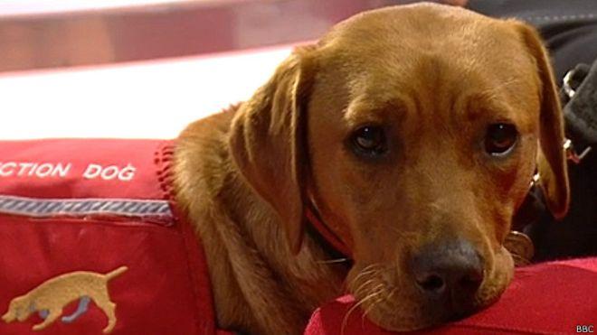 deteccion cancer perros