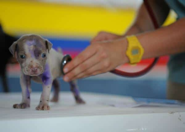 alimentacion perros patologias cardiacas Biodog