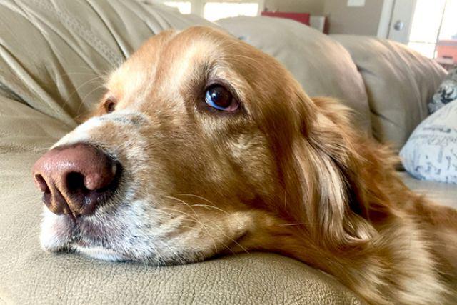 cancer perros