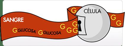 dieta sin glucosa contra cancer perros gatos biodog
