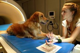 como comprenden los perros a los humanos Biodog