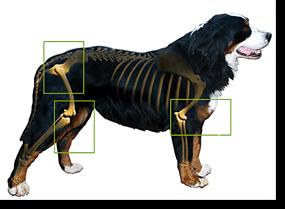 artrosis canina Biodog