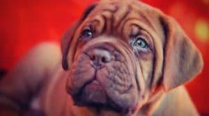 como ven los perros Biodog