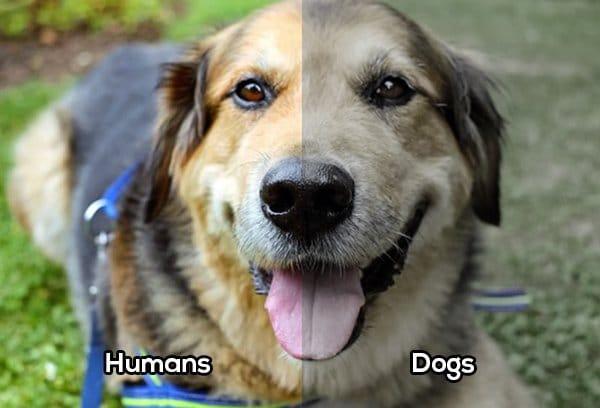 como ven los perros colores Biodog
