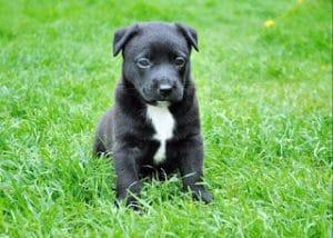 vista perro percepcion humana Biodog