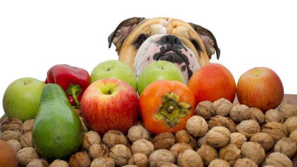10 mejores frutas para tus perros barf Biodog