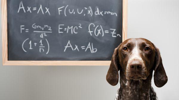 datos cientificos perros