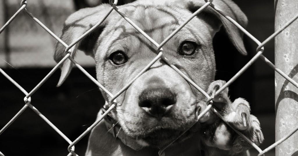 legislacion cola perros Biodog