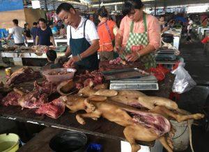 festival carne perro yulin Biodog