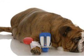 diabetes perro Biodog