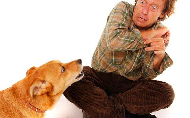perros pueden oler el miedo Biodog