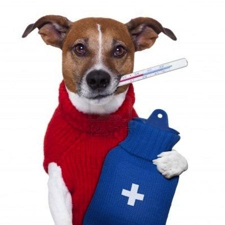 Anemia en perros Biodog