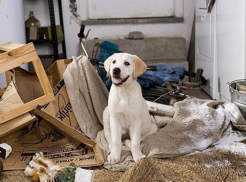 como controlar la ansiedad en los perros Biodog