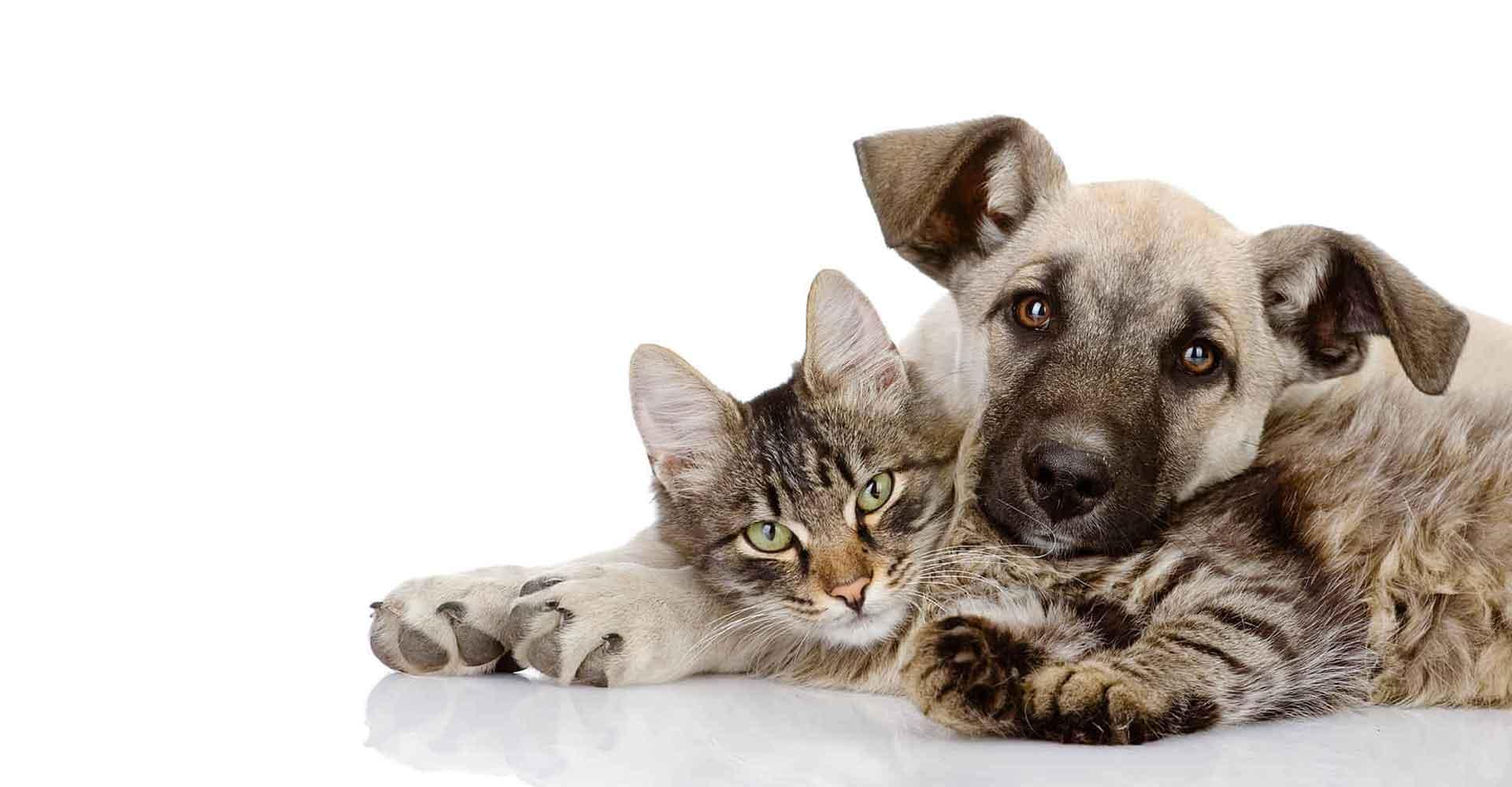 Perros y gatos Alimentación Natural Biodog