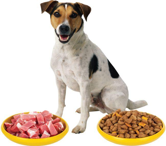 dieta cruda perros