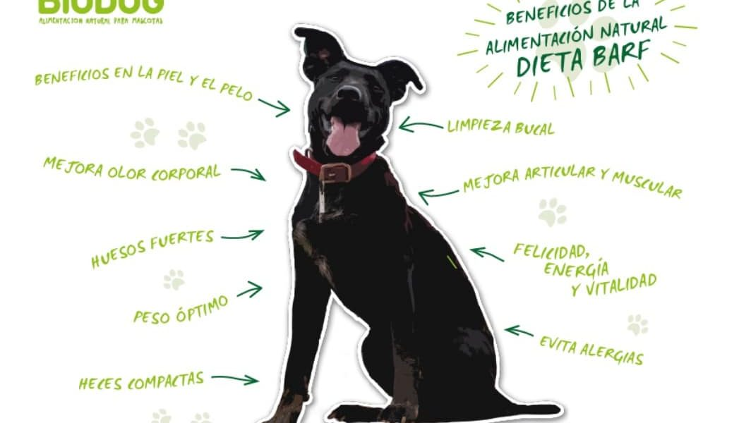 dieta barf para perros alimentacion cruda