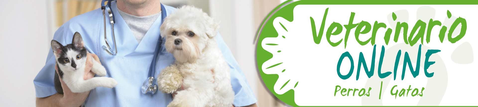 Veterinario online Biodog