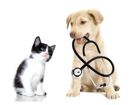 Servicio Veterinario_Biodog