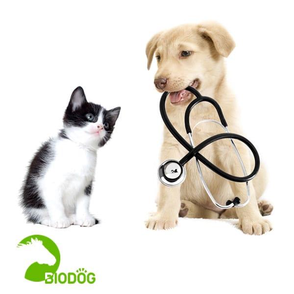 servicio consulta veterinaria Biodog