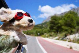 vacaciones perros Biodog