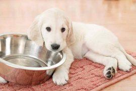 dieta barf cachorros con Biodog